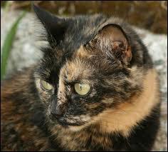 Qui esst ce chat ?