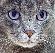 Qui est ce chat ?