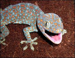 Comment s'appelle cet animal ?