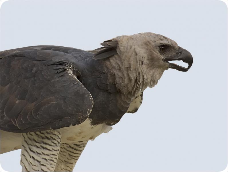 Mais quel est cet oiseau ?