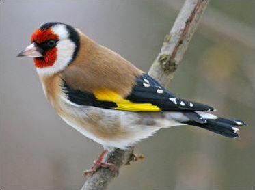 Les oiseaux ( 5 )