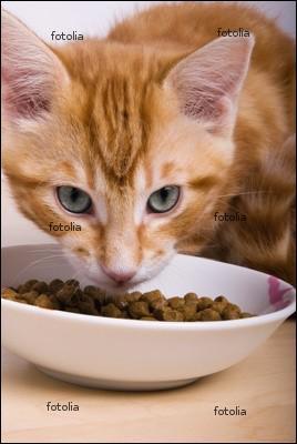 Quiz sur le chat quiz races chats - A quel age couper les griffes d un chat ...