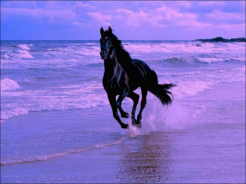 En espagnol, on traduit le mot 'cheval' par...