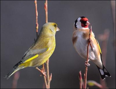 Quel est ce couple d'oiseaux ?