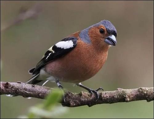 Quizz les oiseaux 6 quiz oiseaux for Oiseau queue rouge