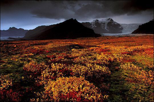 Quelle est la végétation principale en Islande ?