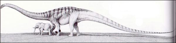 Quel est le dinosaure le plus long ?