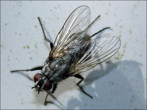 quizz les insectes quiz insectes. Black Bedroom Furniture Sets. Home Design Ideas