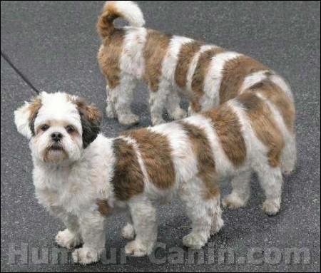 Ce chien ressemble à...