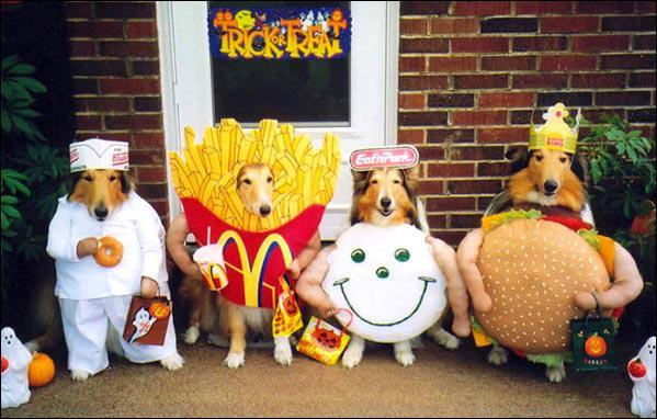 Ces chiens sont au ...