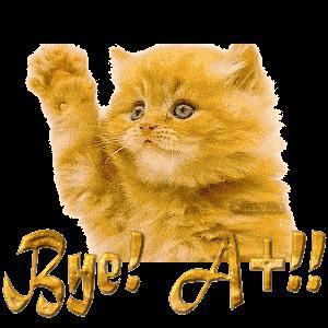 Que dit ce chat sur msn ?