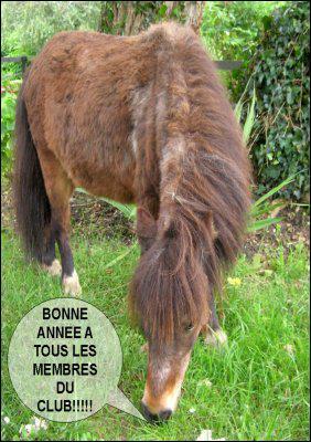 Dans la bulle du poney, que veut dire 'membre' ?