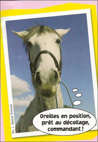 Que représentent les oreilles du cheval ?