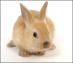 Quel est cet animal aux grandes oreilles ?