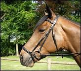 Comment s'appelle la muserolle qui sert à fermer la bouche du cheval ?