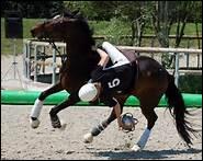 En horse-ball, à quoi sert la sangle de ramassage ?
