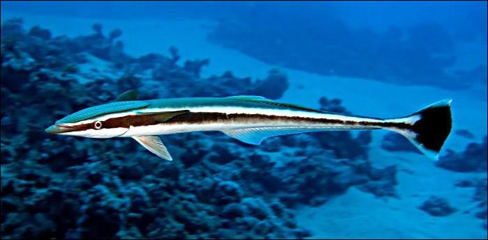 Quizz des poissons surprenants quiz monde poissons - Poisson a ventouse ...