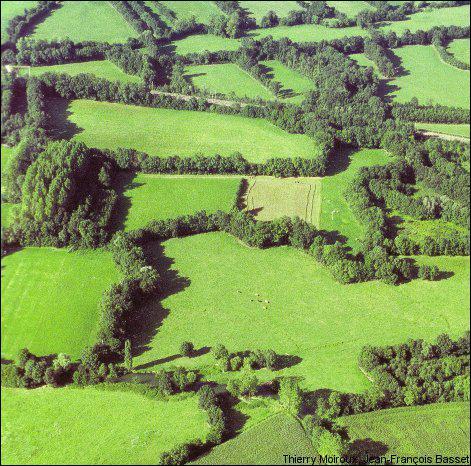 La campagne normande est formée de prés ou de champs séparés par des haies. Comment s'appelle ce paysage ?