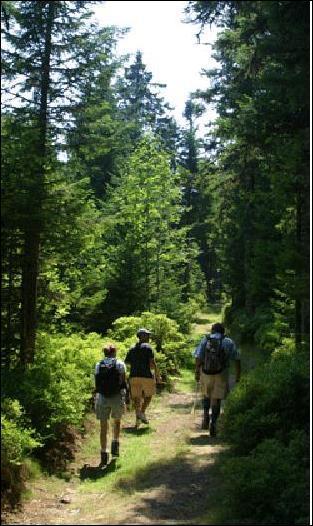 Quel parc naturel peut-on visiter dans la moitié Est de l'Auvergne ?