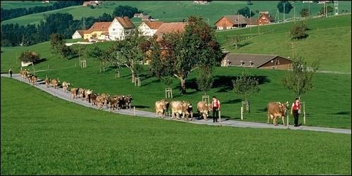 Quel est le contraire du mot rural ?