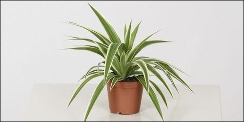 Quelle substance donne aux plantes leur couleur verte ?