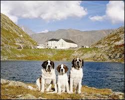 Un hospice valaisan est particulièrement célèbre, notamment parce qu'il a donné son nom à une race de chiens prisée à Hollywood. Quel est le nom de cet hospice ?