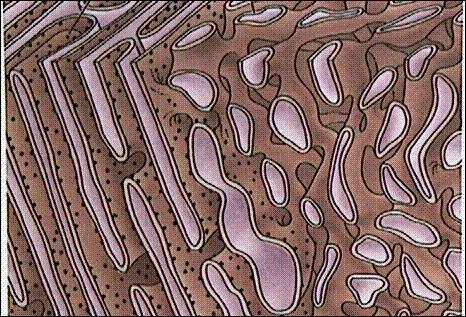 A proximité du noyau, ce réseau porte des ribosomes. Plus à l'intérieur du cytoplasme, il n'y en a pas.