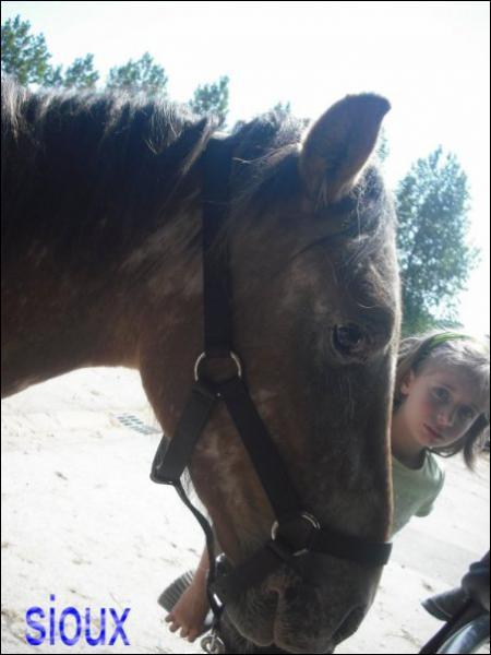 Quelle est la taille d'un double poney ?