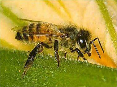 Ces insectes qui piquent