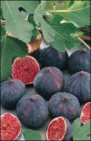 Reconnaissez-vous ce fruit ?