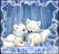 Quel est le point commun entre l'Hermine, le renard polaire, et le lièvre Blanchon ?