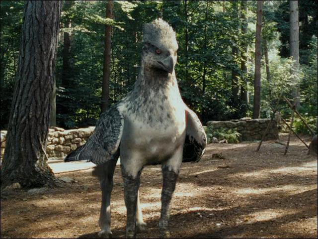 Quel est le nom de ce majestueux hippogriffe ?