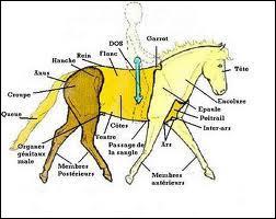 Le galop 1 quiz qcm chevaux galop 1 - Purger les radiateurs dans quel ordre ...