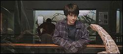 Lors de la sortie au zoo au début du film , comment Harry décrit-il les visages que le serpent doit regarder tout au long de ses journées à travers la vitre ?