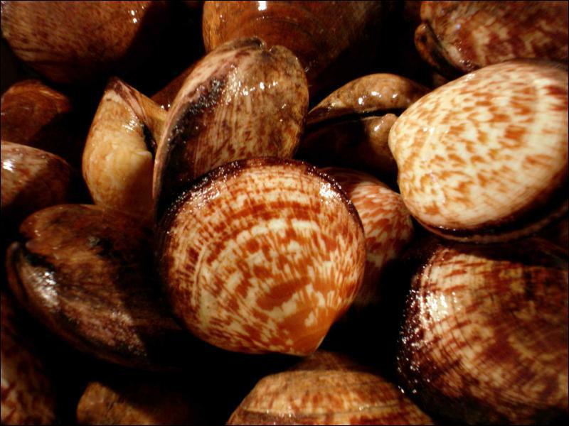 Comment appelle-t-on ce coquillage, parfois surnommé 'l'huître du pauvre' ?