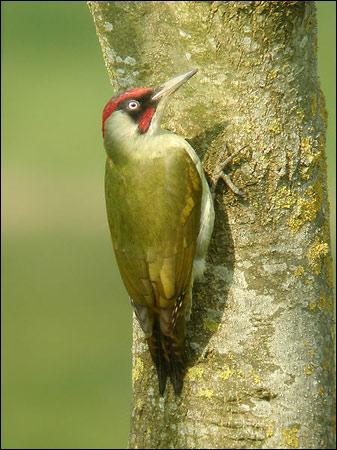 Le bec des oiseaux pousse-t-il ?