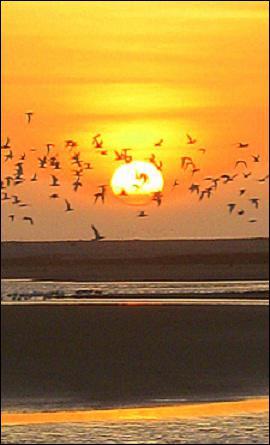 Quel(s) autres élément(s) permet(tent) à l'oiseau migrateur de s'orienter ?