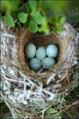 A quelle période a lieu la reproduction chez la majorité des oiseaux de France ?