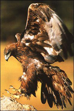 Combien de temps vivent de grands oiseaux comme la cigogne, l'aigle ou le vautour ?