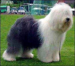 Comment s'appelle cette race de chien ?