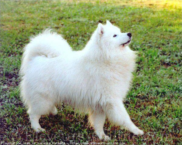 Les races de chiens (1)