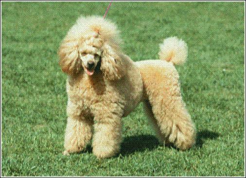 Quel est le nom de ce chien ?