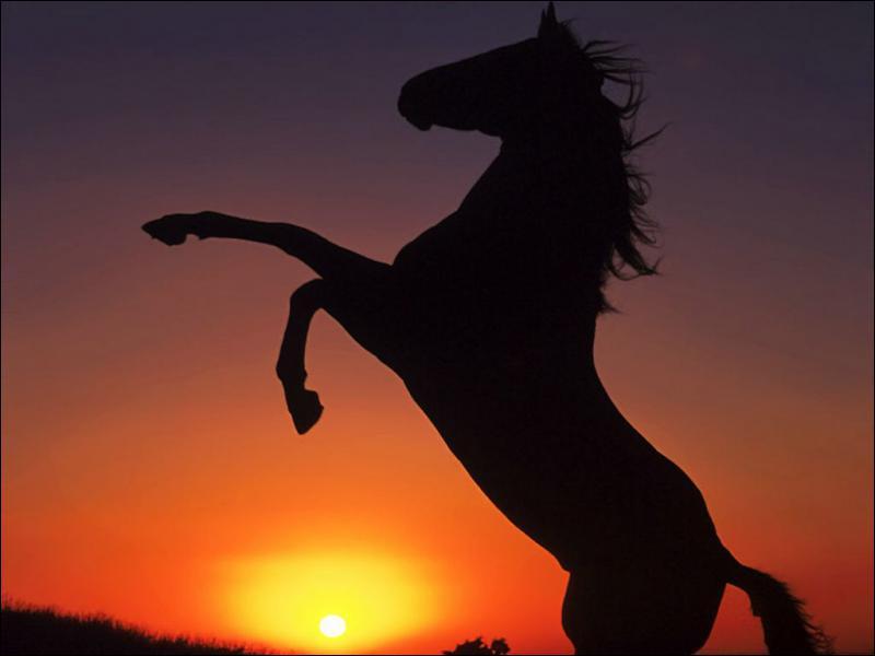 Comment appelle t-on un bébé cheval ?