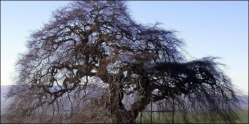 Quizz a la d couverte du monde 30 quiz decouvertes - Comment s appelle l arbre du kaki ...