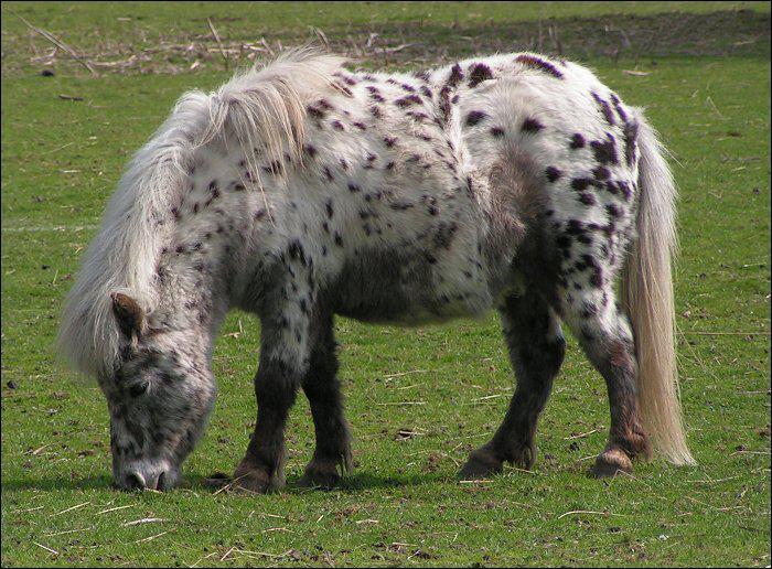 Quelle race de chevaux/poney n'existe pas ?
