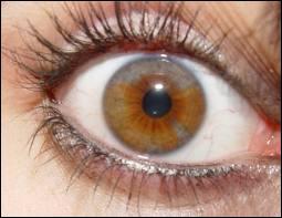 Les yeux marrons clairs sont souvent appelés :