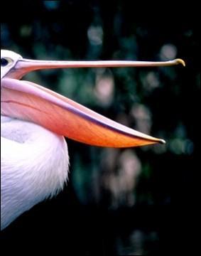 A quel oiseau appartient ce bec ?