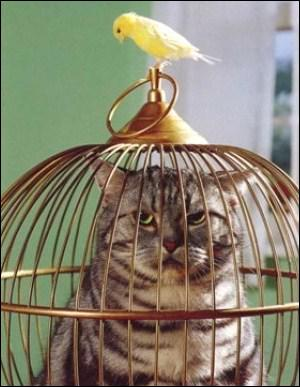 J'ai trouvé la photo excellente, mais je n'ai pas d'idées de question. Alors je vous demanderai simplement, quel animal est en cage ?