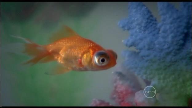 Comment s'appelle le poisson de Cléo ?