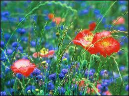 Qui a chanté 'Le pouvoir des fleurs' ?